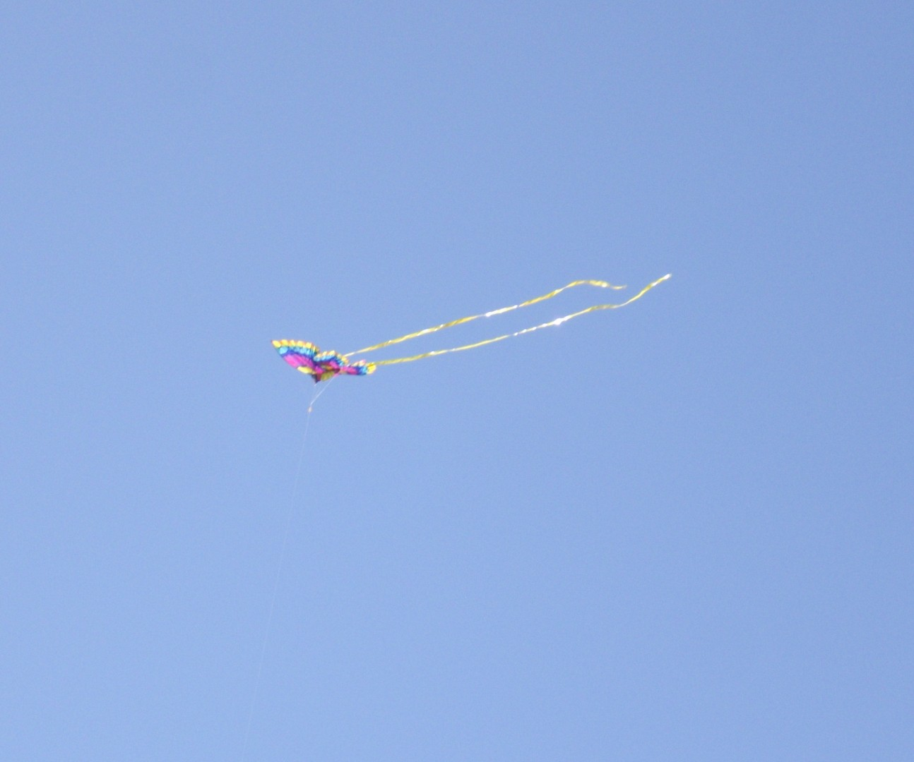 Kite Flying 2010 Festival   Joyce Kuzmanic