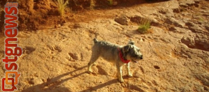 Toby the Wonder Dog stands in the footprints of the great dinosaurs, Red Cliffs Reserve, St. George, Utah, 2011 | Photo by Joyce Kuzmanic, St. George News