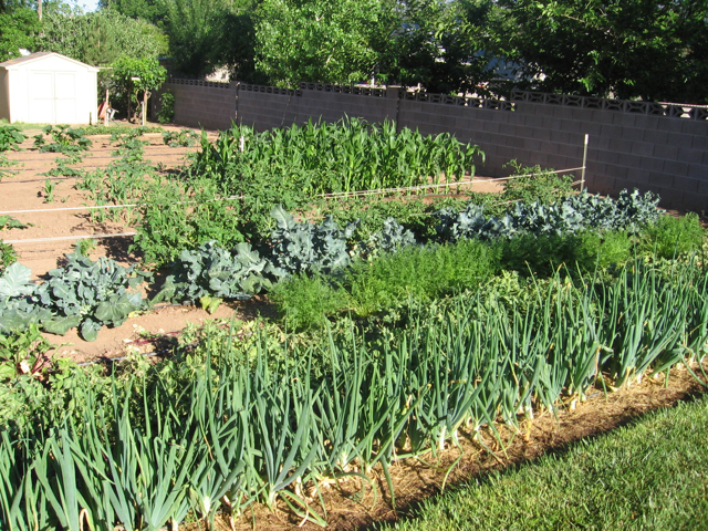 Rex S Tips For A Mixed Vegetable Garden St George News