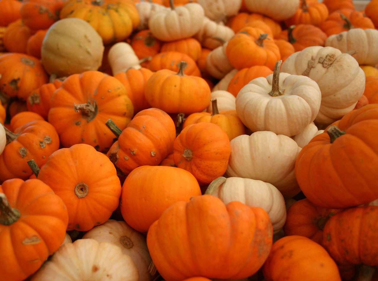 12th annual cedar city pumpkin festival offers fall themed activities for youngsters st george - Fall wallpaper pumpkins ...