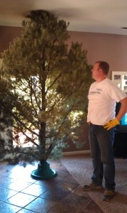 Dear husband of humorist Elise Haynes spying success in the perfect fit Christmas Tree - What the HAYnes?!