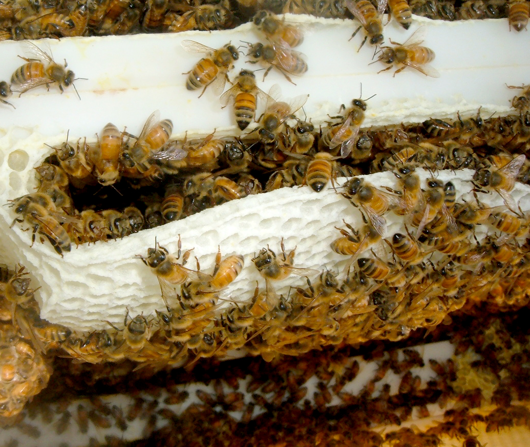 Southern Utah Bee Season Common Concerns Safety Tips And