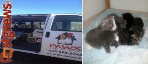 P.A.W.S. cat hoard rescue P.A.W.S.