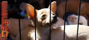 Pet adoption feature