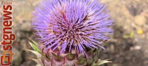 Wildflower-604x272