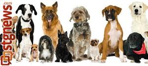 super-pet-adoption