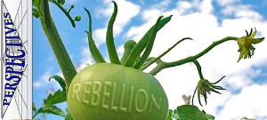 Perspectives-sewing-the-seeds-of-rebellion