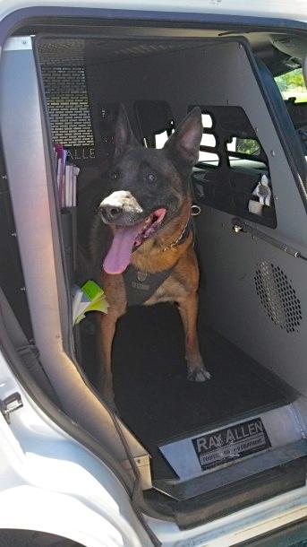 Marco in the patrol truck, Marco's handler, St. George, Utah, Jun 19, 2013 | Photo by Mori Kessler, St. George News