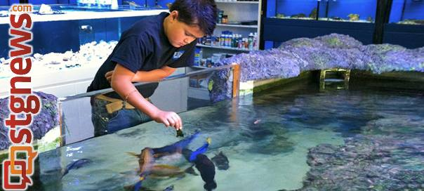 Devin Hender feeds fish in the store's 2,500-gallon saltwater pond. Each day before closing, customers are invited to feed the store's collection of fish including a resident stingray and sohal tang named Woofy, St. George, Utah, June 2013   Photo by Melynda Thorpe Burt, St. George News