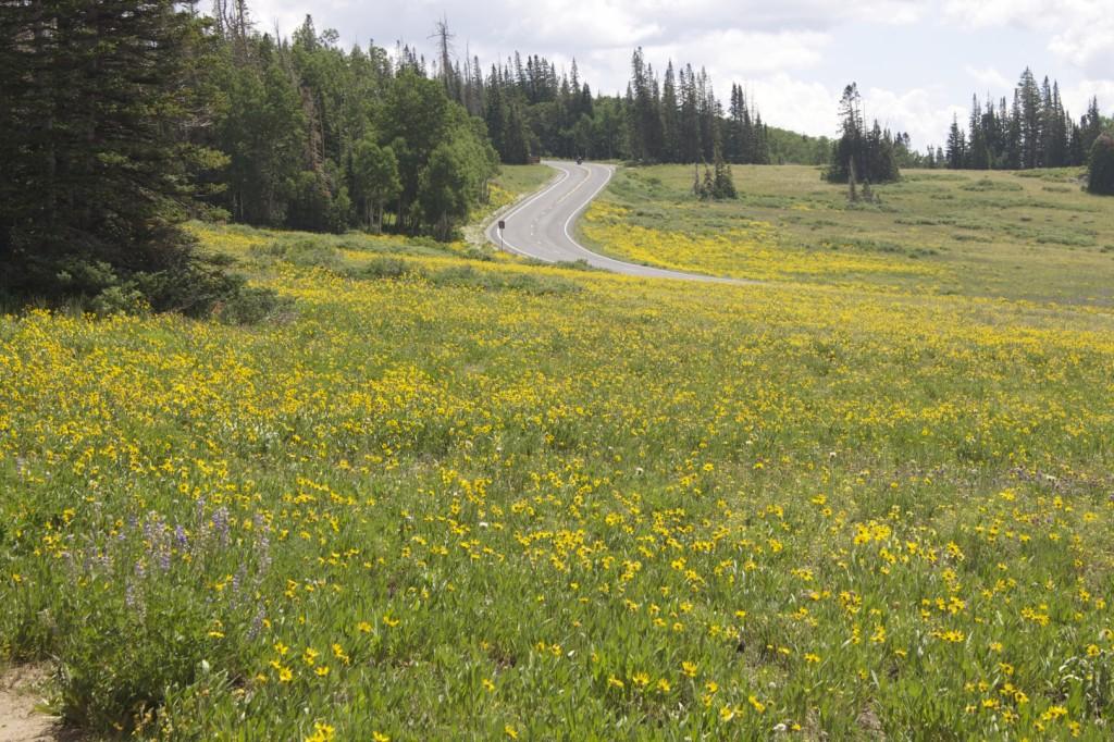 Field of wildflowers Southern Utah STGnews.com