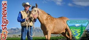 blm-wild-horses