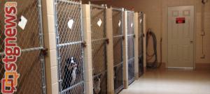 St. George Animal Shelter, St. George, Utah, July 22, 2013   Photo by Michael Flynn, St. George News