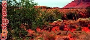 The Kayenta desert community, Ivins, Utah, June 24, 2013 | Photo by Alexa Verdugo Morgan, St. George