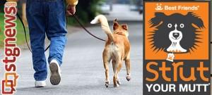 strut-your-mutt