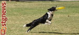 The 2012 BAM Dog Day Spectacular and Dog Walk Against Animal Abuse, Hurricane, Utah, Sept. 15, 2013 | Photo courtesy of Because Animals Matter