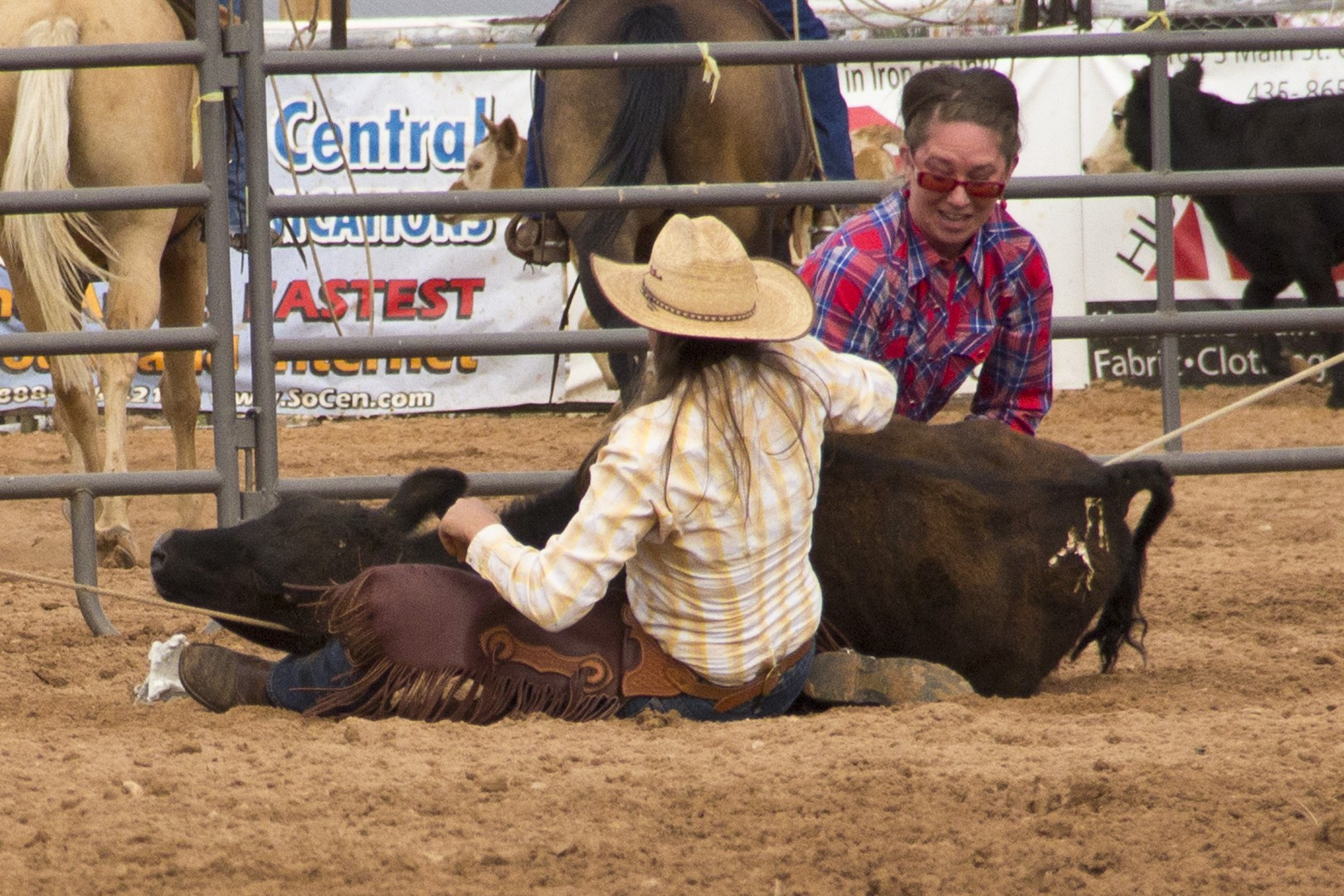 Dove Jorgeson and Kimber Larson (in the light colored shirt) hold their own while making a calf behave. Iron County Fair, Parowan, Utah, Aug. 31, 2013 | Photo by John Teas, St. George News