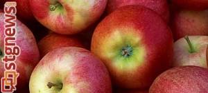 apple-fest-3