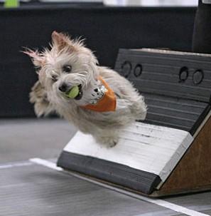 len_small-dog-on-box