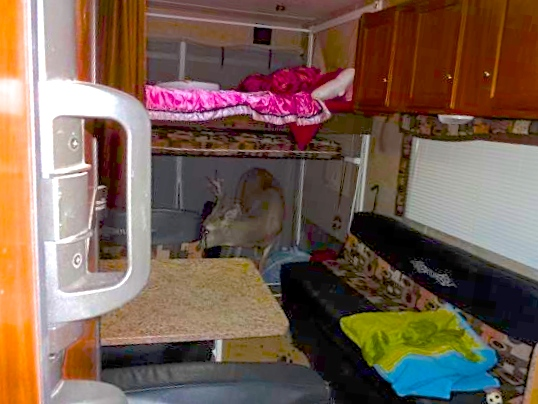 Deer found in camper after crashing through the camper's wall, Garfield County, Utah, Oct. 4, 2013 | Photo courtesy of the Garfield County Sheriff's Office
