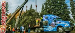 national-christmas-tree2