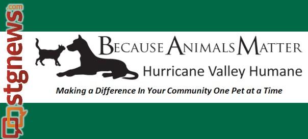 becuase-animals-matter-feature