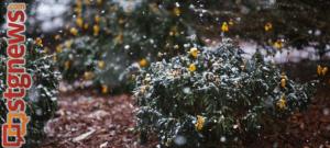 Snow in St. George, Utah, Dec. 7, 2013 | Photo by John Teas, St. George News