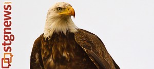 whats-killing-the-eagles