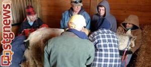 Helping hands care for Elsa at the Dust Devil Ranch Sanctuary for Horses, Cedar City, Utah, Jan. 4, 2014 | Photo courtesy of Ginger Grimes
