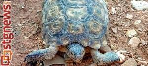 JAN 30 Adopt a desert tortoise - Jan. 30 DWR news release