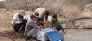DWR Aquatic Biologists, Native Woundfin project March 2011   Photo courtesy of Division of Wildlife Resources, St. George News