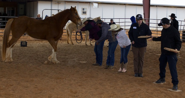 Participants learn how to work together in equine therapy demonstration, Hurricane, Utah, Feb. 28, 2014 | Photo by Samantha Tommer, St. George News