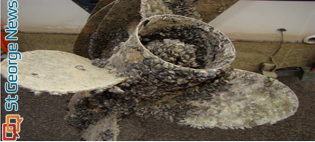 Quagga mussels stuck to a boat's propeller, location and time unknown | Photo courtesy of the Utah Division of Wildlife Resources
