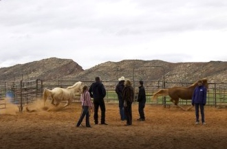 Participants attempt to harness horses at equine demonstration, Hurricane, Utah, Feb. 28, 2014 | Photo by Rhonda Tommer, St. George News