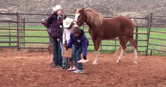Equine therapy exercise St. George News
