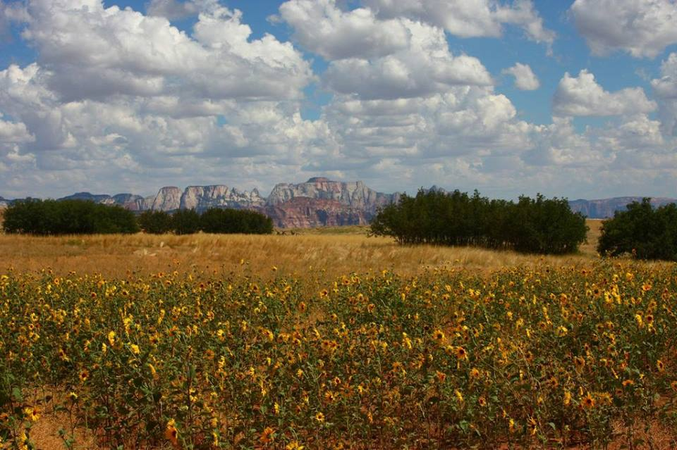 Flowers near the towers, Zion National Park, Aug. 26, 2012 | Photo by James Wilson, St. George News