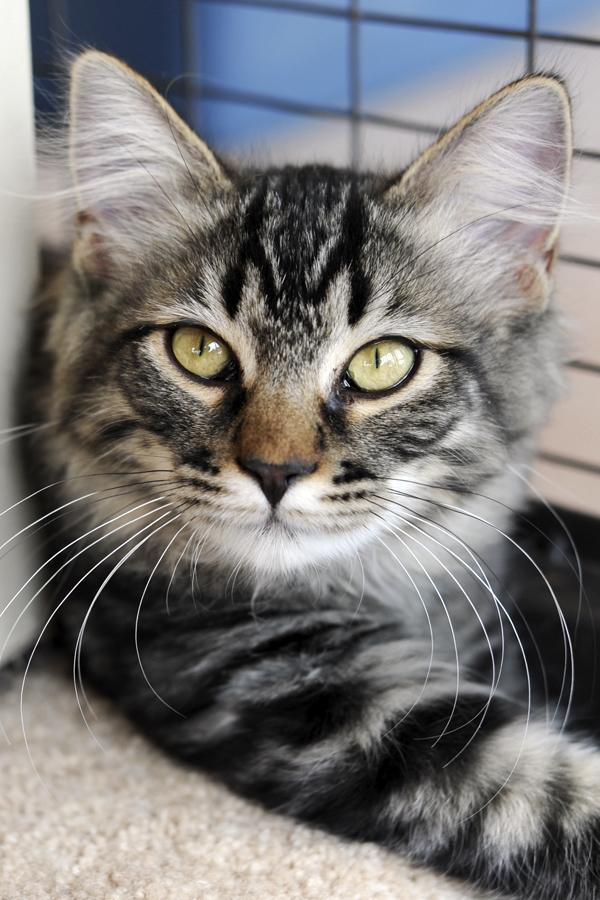 Jefferson, an adoptable cat at the Best Friends Animal Sanctuary, Kanab, Utah, April 1, 2014 | Photo courtesy of Barbara Williamson