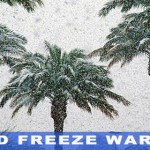 hard-freeze