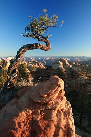 View into Zion National Park from Canaan Mountain Wilderness, Zion National Park, March 21, 2014 | Photo by Drew Allred, St. George News