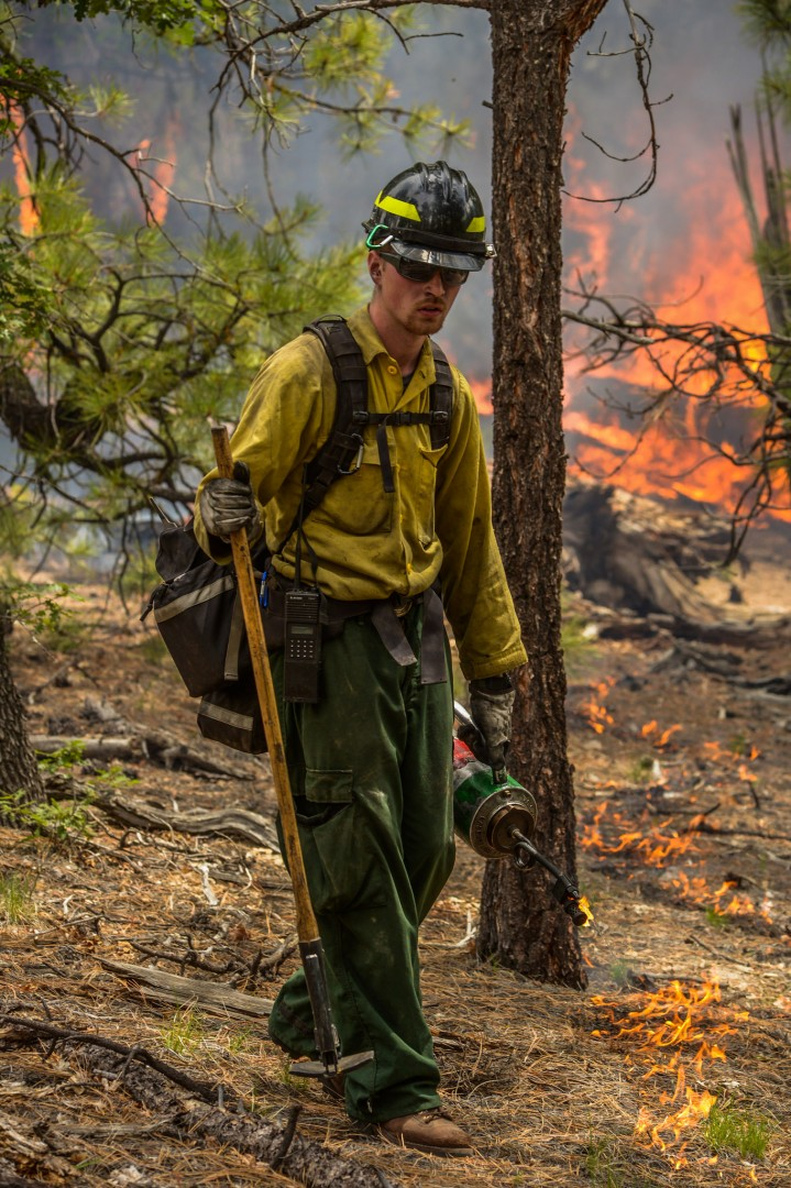 A crew member uses a drip torch to light fuels along the perimeter of the Sitgreaves Complex. The Sitgreaves Fire Complex is being managed for resource benefit on the Williams Ranger District of the Kaibab National Forest, Arizona, July 31, 2014 |Photo by Wade Ward, U.S. Forest Service, Southwestern Region, Kaibab National Forest, St. George News