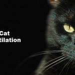 cat-mutilation