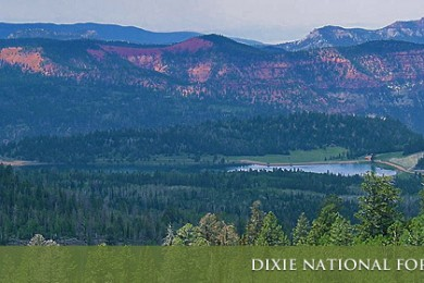 dixie-national-Forest