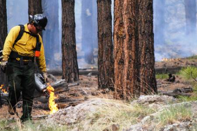 Crews continue managed ignitions along Forest Service Road 76 on the Sitgreaves Complex, Greater Grand Canyon, Arizona, circa July 26, 2014 | Photo by Holly Krake, courtesy of U.S. Forest Service, St. George News