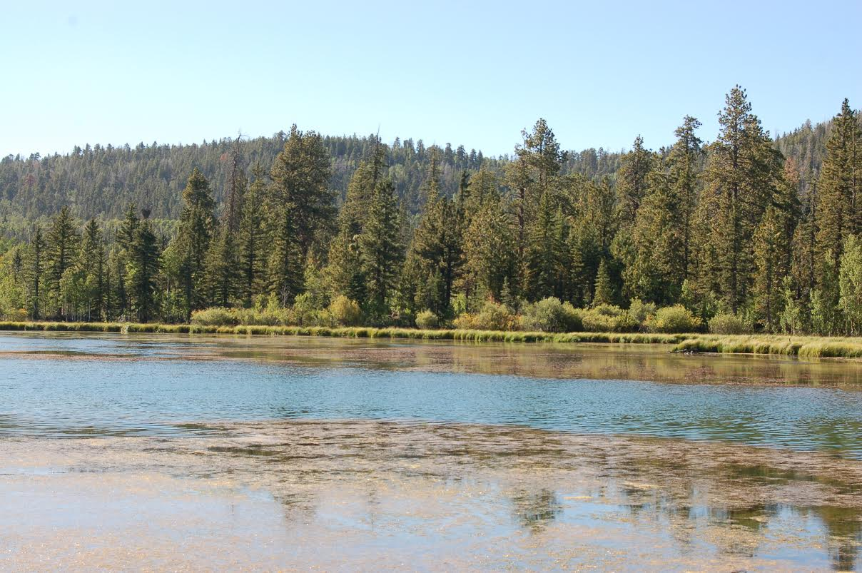 Explore the camping cure no homework in the great for Fish lake utah camping