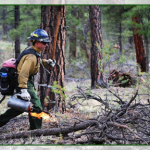 A USFS firefighter conducts managed ignitions on the McRae Fire near Tusayan, Arizona, July 17, 2014 | Photo courtesy of US Agriculture Department Forest Service, St. George News