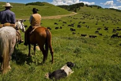 IRS Livestock