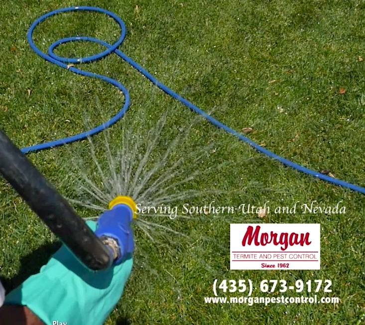 Feeding your lawn in the fall helps it recover from the summer heat and prepare for the winter season | Photo courtesy of Morgan Termite & Pest Control, St. George News