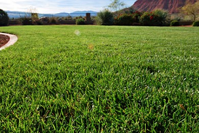 adv. grass