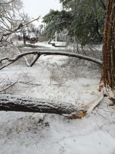 The remnants of a tree laying in Cindy Porr's front yard following a snowstorm, Cedar City, May 18, 2014 | Photo courtesy of Cindy Porr, St. George News