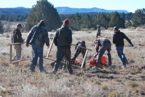 Biologists and helpers rush to retrieve the 2 bighorn sheep set down by the helicopter, Nov. 23, 2014 | Photo by Leanna Bergeron, St. George News