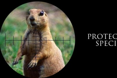 Perspectives-prarie-dogs